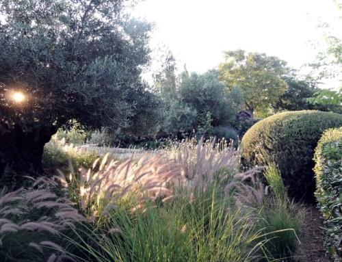 Noahs Garden